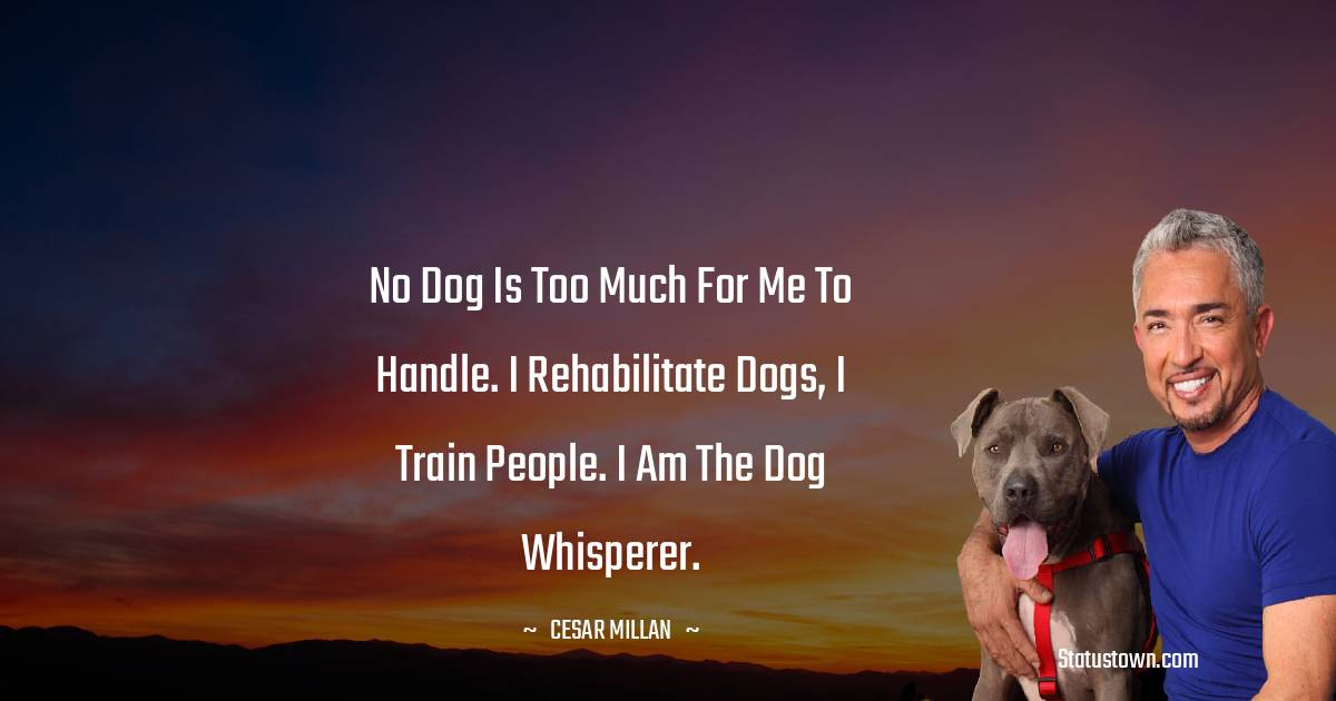 No dog is too much for me to handle. I rehabilitate dogs, I train people. I am the dog whisperer.