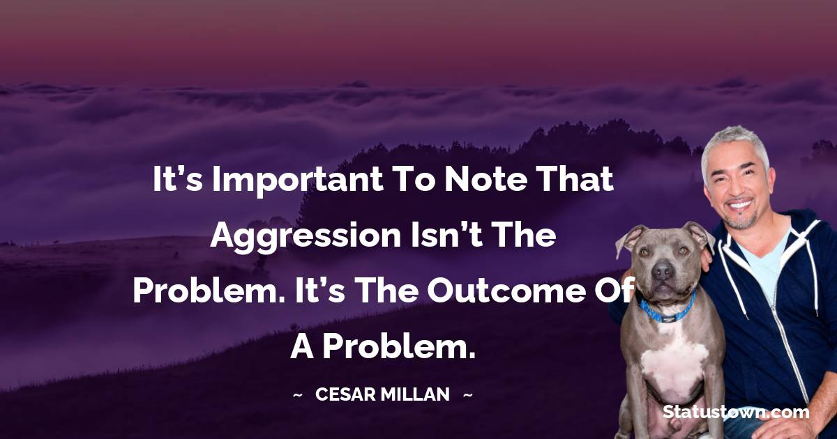 It's important to note that aggression isn't the problem. It's the outcome of a problem.