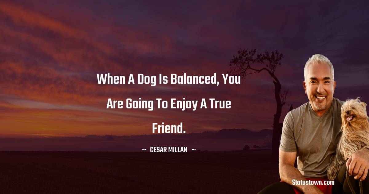 Cesar Millan Quotes images