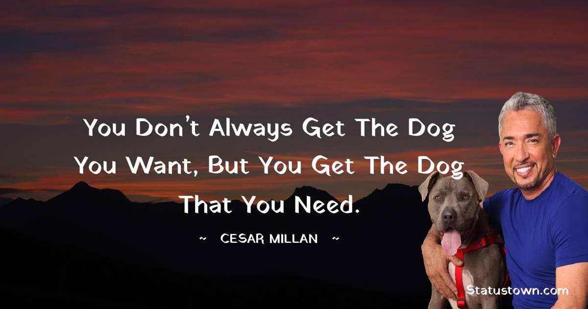 Cesar Millan Thoughts
